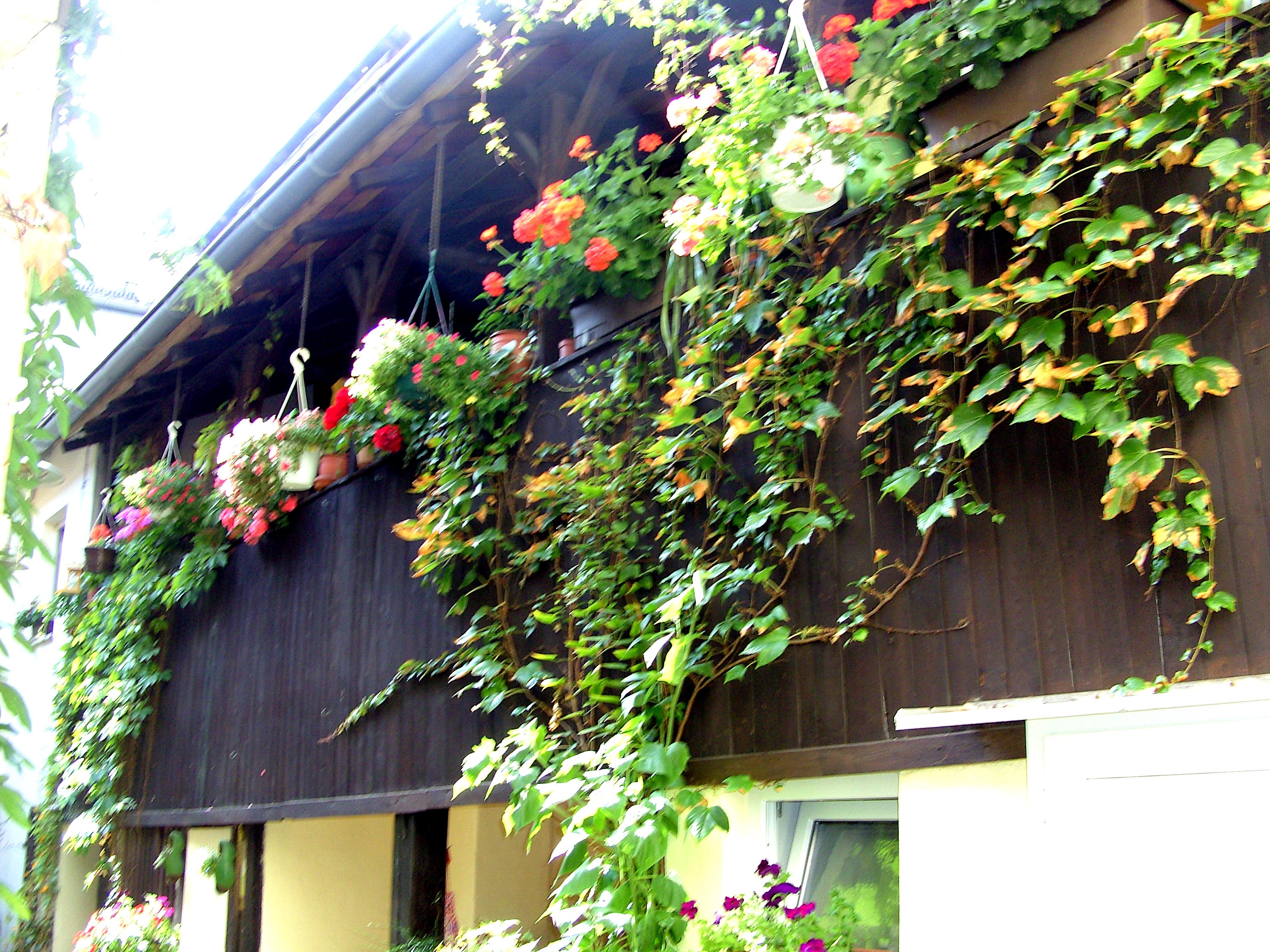Innenhof Judengasse 15